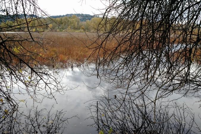 shallow lake