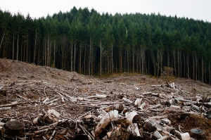 Clearcutting-By Calibas
