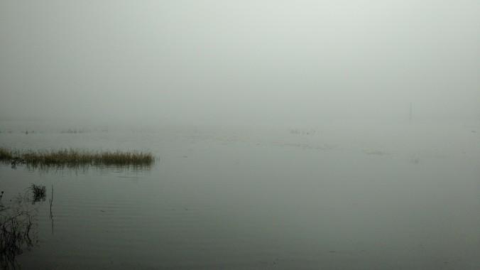 Fernhill fog, December 2016