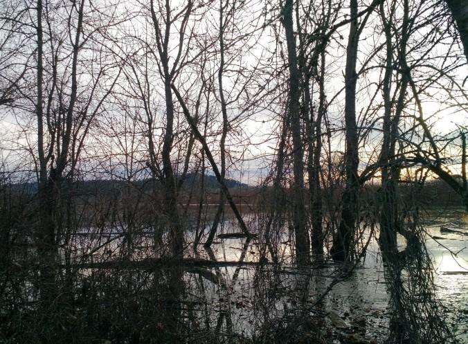 Dabbler's Marsh