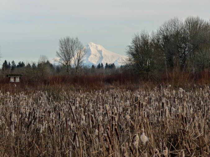 Mt. Hood from the Wetlands, photo by Alan
