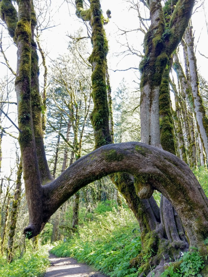 Contortionist tree