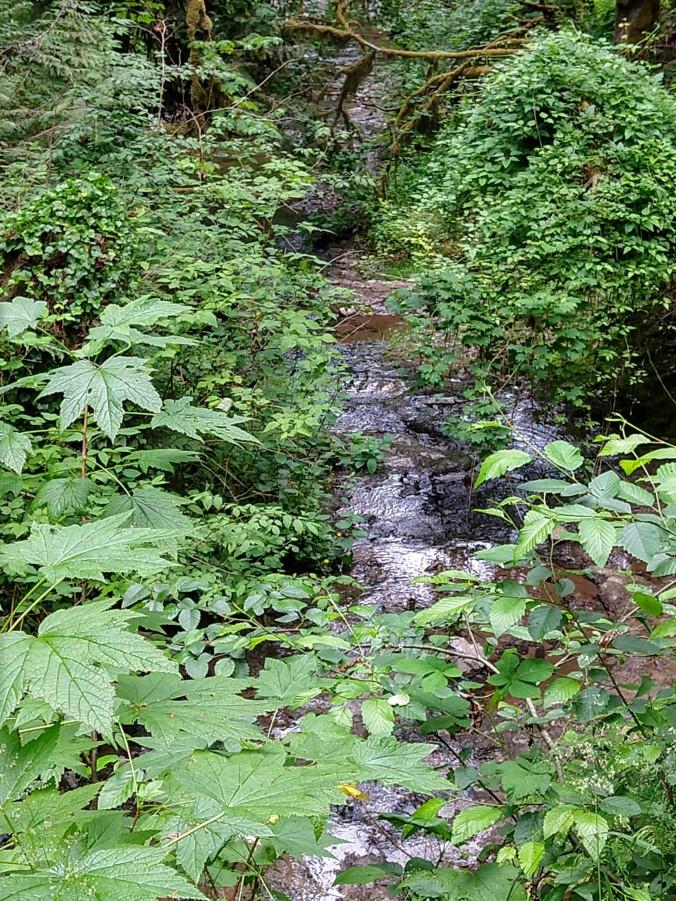 Burbling creek