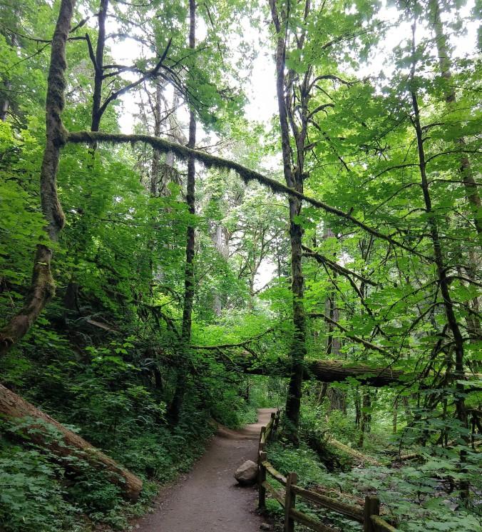 Geometric treescape