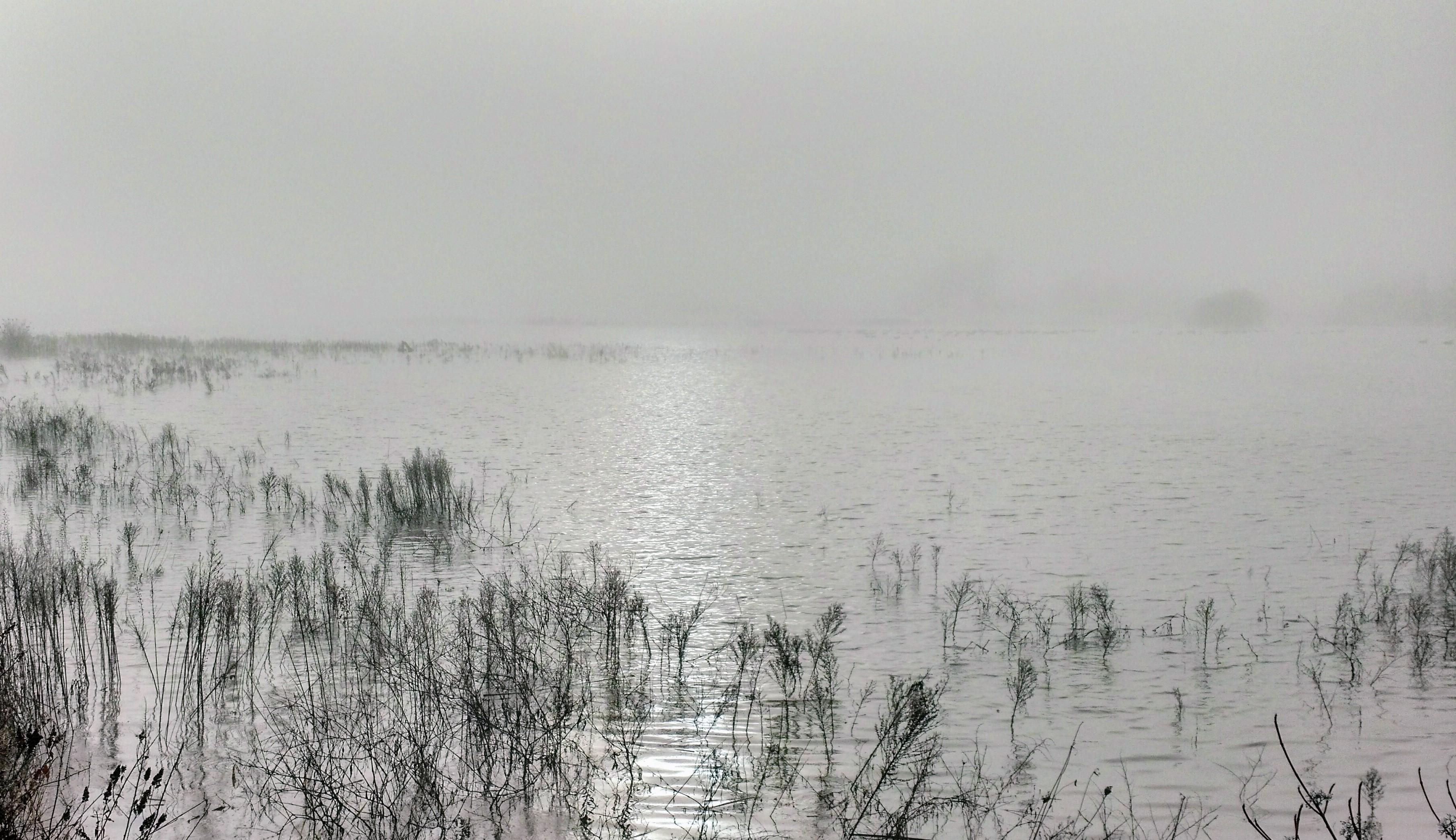 Winter Stream of Consciousness