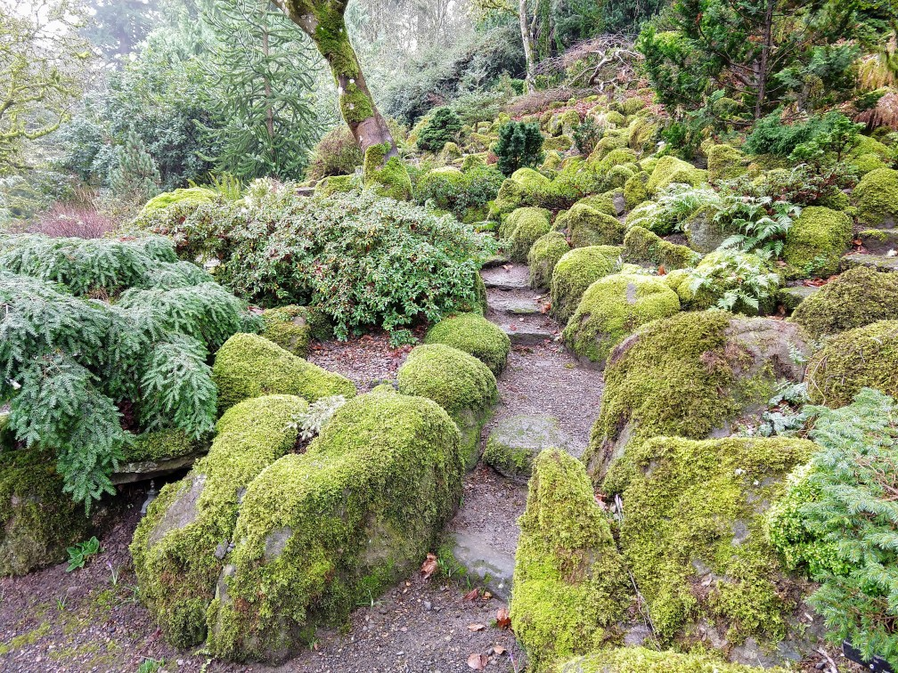Moss makes every bright in winter