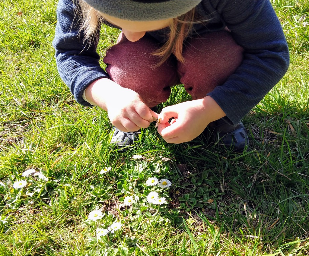child finding tiny daisies