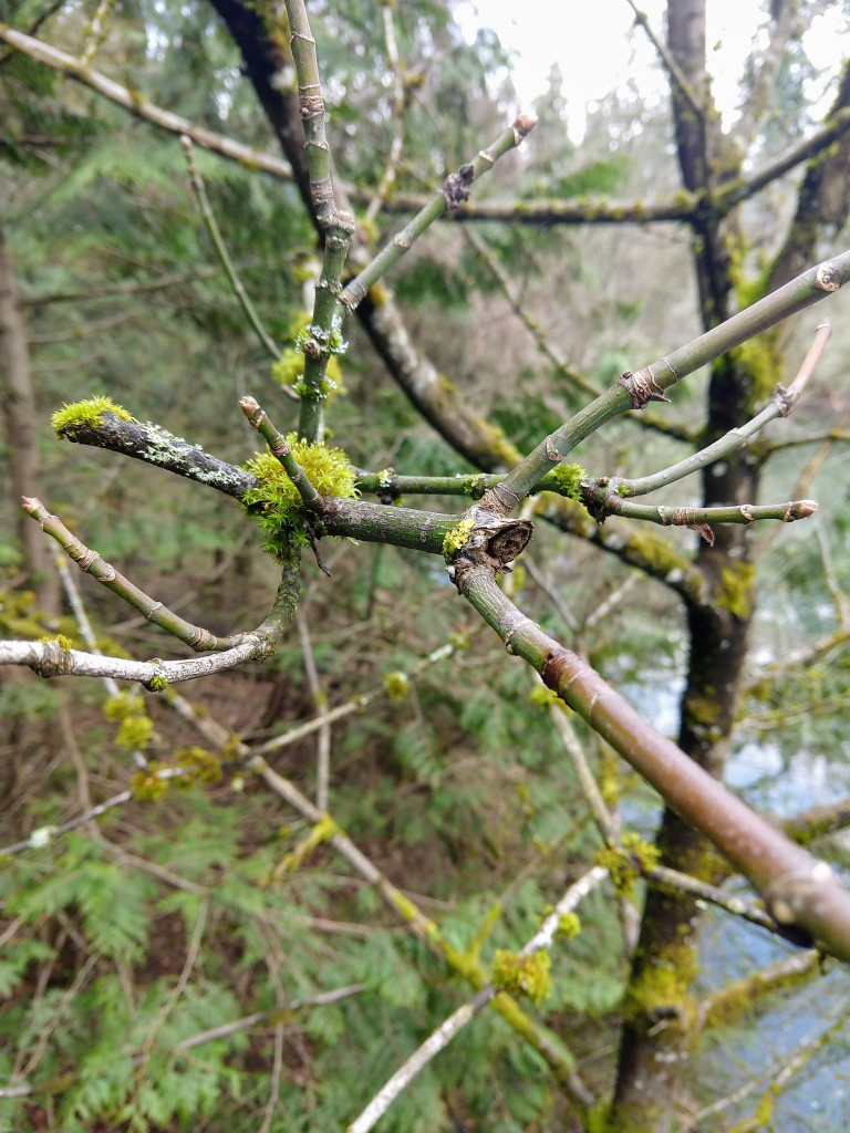 mostly bare branches, drying moss