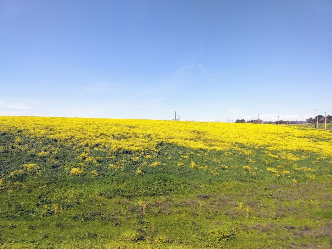 Blooms and Moss Landing