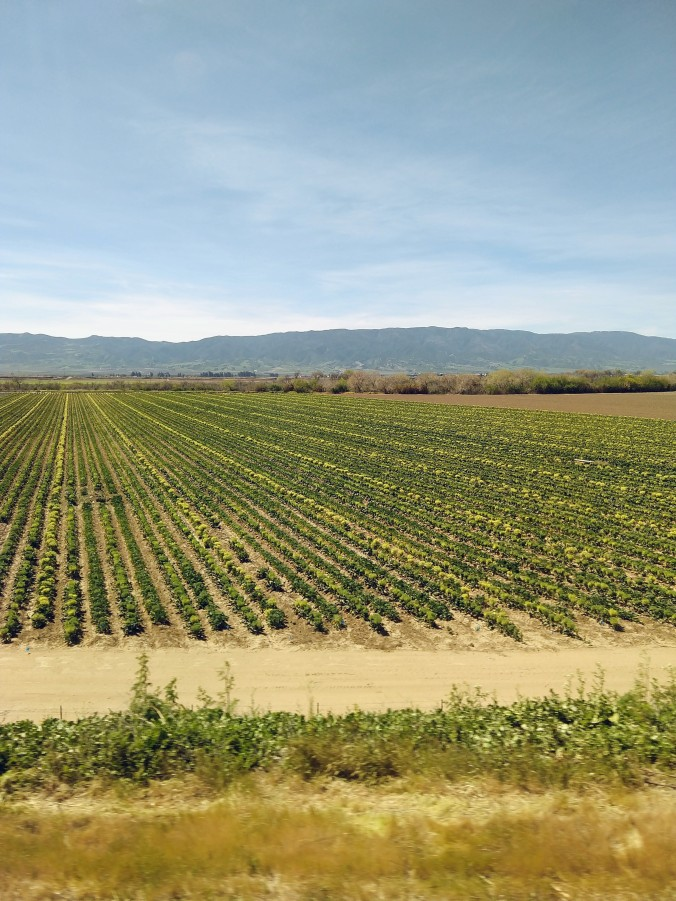 California crops meticulously laid out