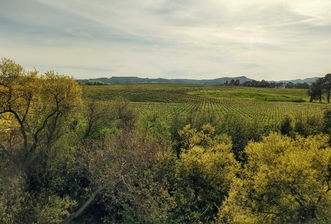 Never ending vineyards