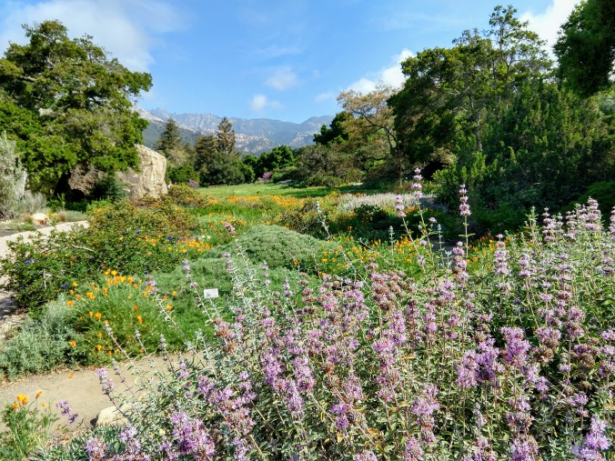 SB Botanic Garden wildflower meadow