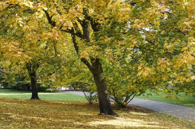 Trees that embrace, draping gracefully, by Alan