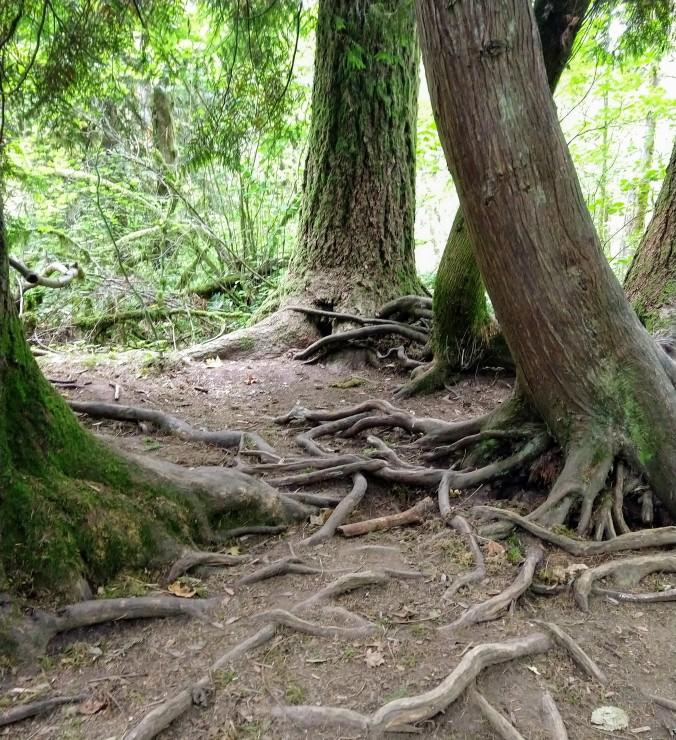 Strong roots, grasping at life