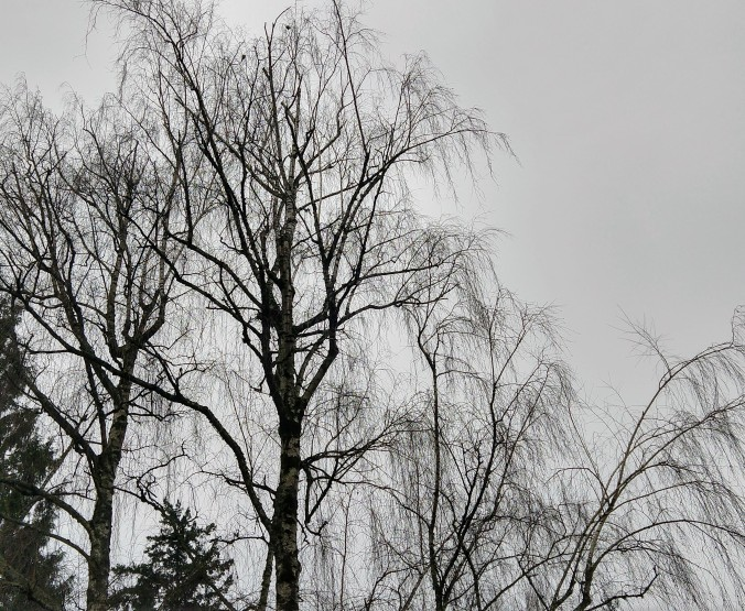 Weeping branches