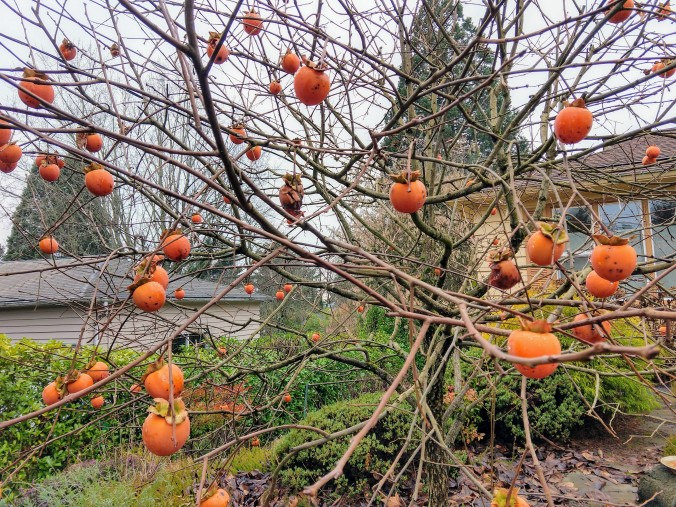 Naked but for the persimmons