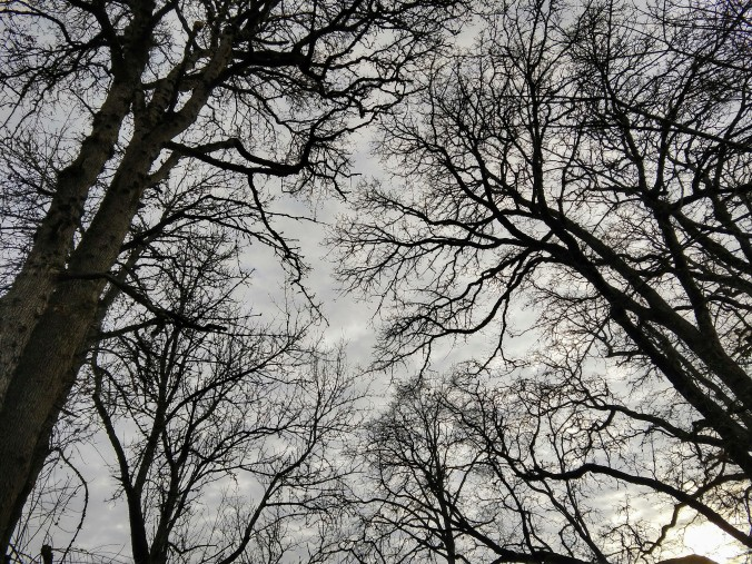 Dark branches stretch out in relief against a pale sky.