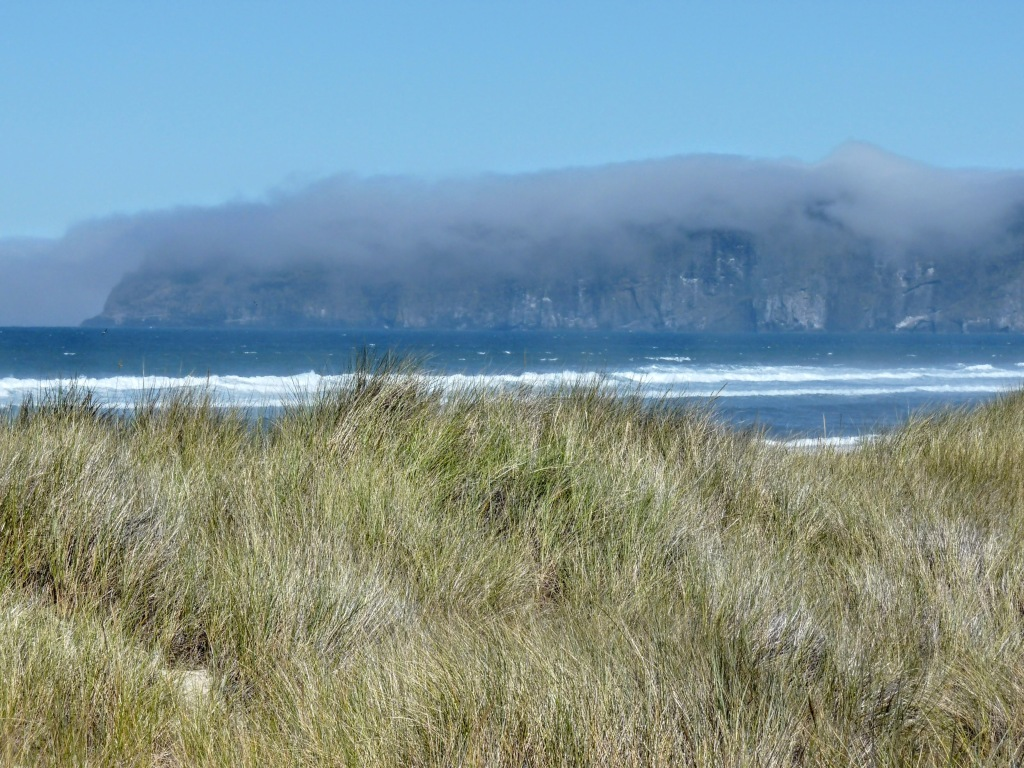 Foggy Cape Lookout and sedge